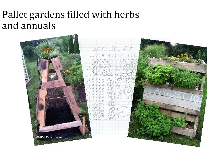 Pallet gardens filled with herbs and annuals © 2013 Pam Hosimer 42