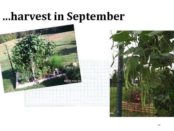 …harvest in September © 2013 Pam Hosimer 44