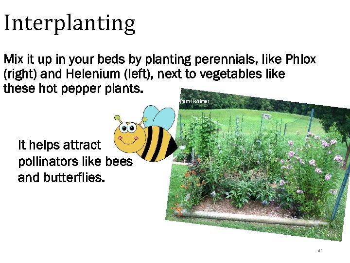 Interplanting Mix it up in your beds by planting perennials, like Phlox (right) and