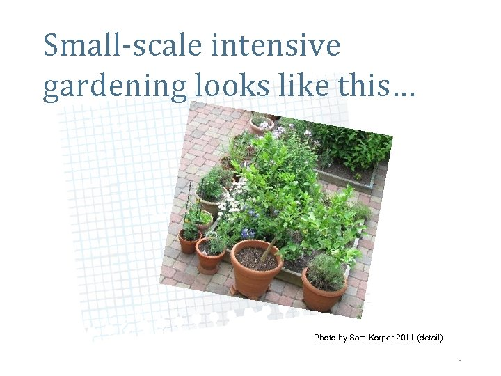 Small-scale intensive gardening looks like this… Photo by Sam Korper 2011 (detail) 9