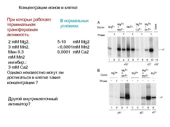 Концентрации ионов в клетке При которых работает терминальная трансферазная активность В нормальных условиях 2