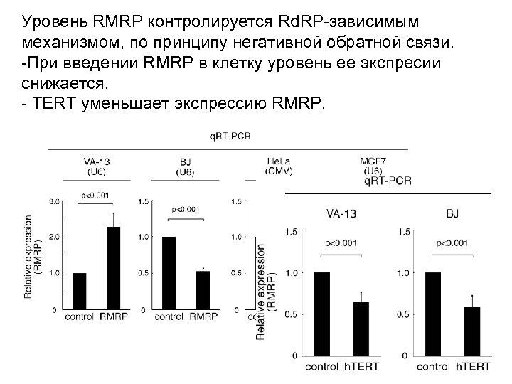 Уровень RMRP контролируется Rd. RP-зависимым механизмом, по принципу негативной обратной связи. -При введении RMRP