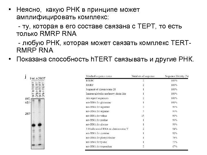 • Неясно, какую РНК в принципе может амплифицировать комплекс: - ту, которая в