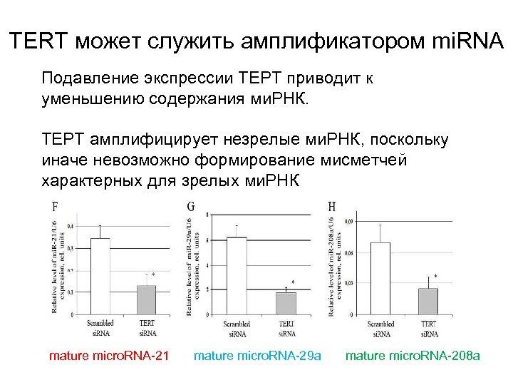 ТERT может служить амплификатором mi. RNA Подавление экспрессии ТЕРТ приводит к уменьшению содержания ми.