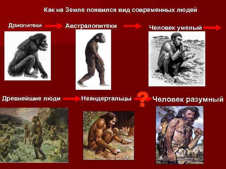 Как на Земле появился вид современных людей Дриопитеки Древнейшие люди Австралопитеки Неандертальцы Человек умелый