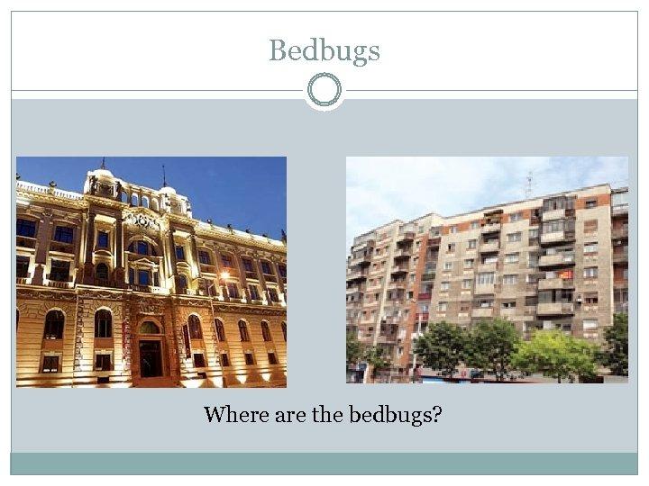 Bedbugs Where are the bedbugs?