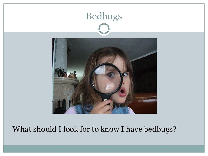 Bedbugs What should I look for to know I have bedbugs?