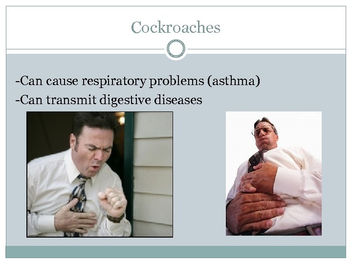 Cockroaches -Can cause respiratory problems (asthma) -Can transmit digestive diseases