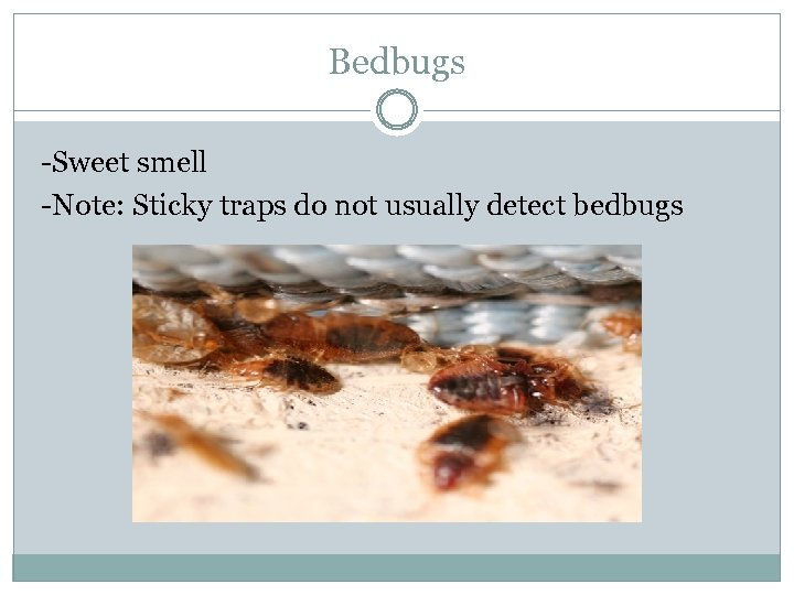 Bedbugs -Sweet smell -Note: Sticky traps do not usually detect bedbugs