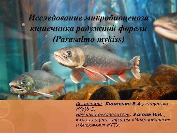 Исследование микробиоценоза кишечника радужной форели (Parasalmo mykiss) Выполнила: Якименко В. А. , студентка М(б)б-3.