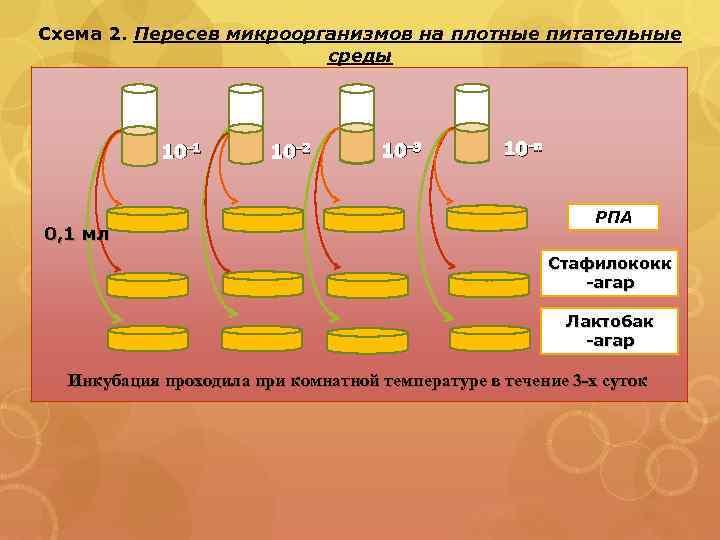 Схема 2. Пересев микроорганизмов на плотные питательные среды 10 -1 0, 1 мл 10