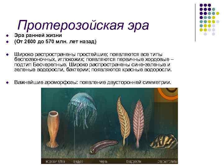 Протерозойская эра l l Эра ранней жизни (От 2600 до 570 млн. лет назад)