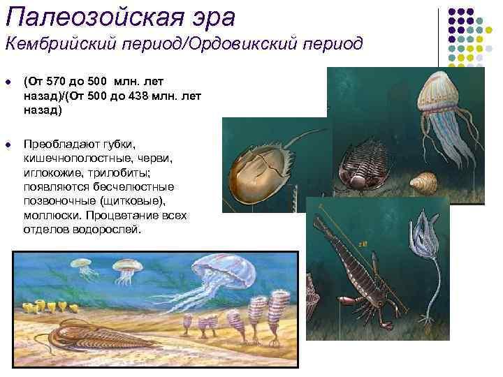 Палеозойская эра Кембрийский период/Ордовикский период l (От 570 до 500 млн. лет назад)/(От 500