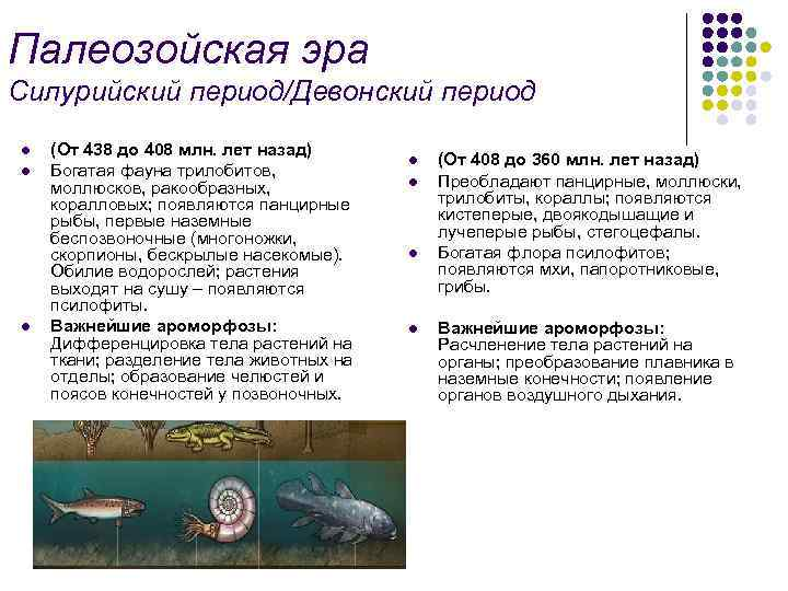 Палеозойская эра Силурийский период/Девонский период l l l (От 438 до 408 млн. лет