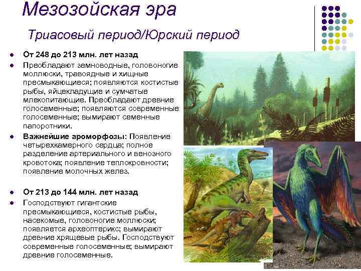 Мезозойская эра Триасовый период/Юрский период l l l От 248 до 213 млн. лет