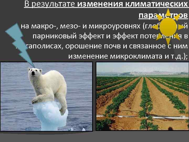 В результате изменения климатических параметров на макро-, мезо- и микроуровнях (глобальный парниковый эффект