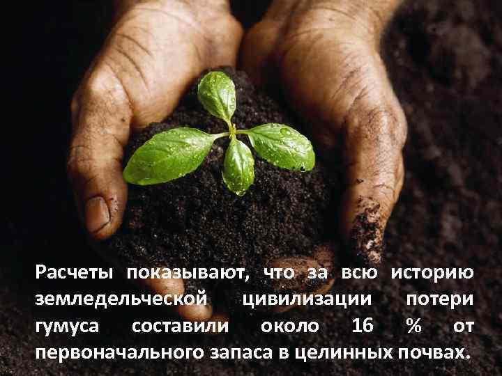 Расчеты показывают, что за всю историю земледельческой цивилизации потери гумуса составили около 16 %