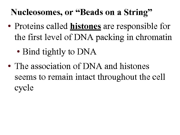 """Nucleosomes, or """"Beads on a String"""" • Proteins called histones are responsible for the"""