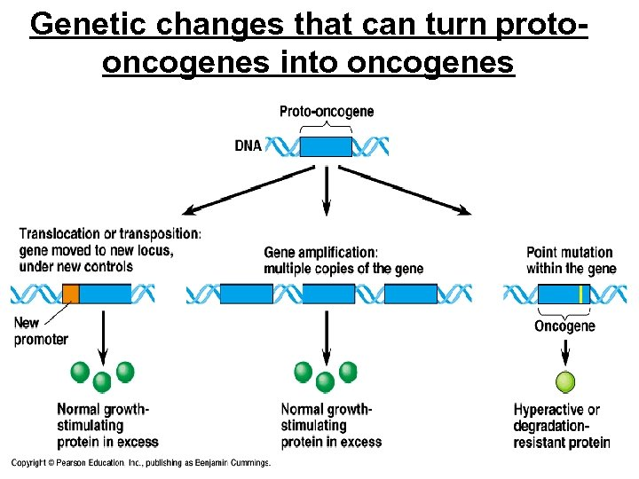 Genetic changes that can turn protooncogenes into oncogenes