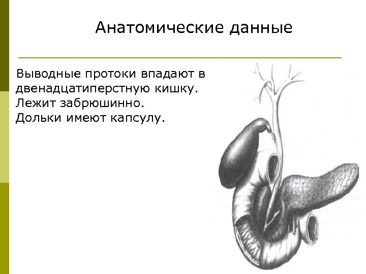 Анатомические данные Выводные протоки впадают в двенадцатиперстную кишку. Лежит забрюшинно. Дольки имеют капсулу.