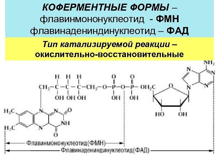 В 2 – РИБОФЛАВИН – витамин роста КОФЕРМЕНТНЫЕ ФОРМЫ – флавинмононуклеотид - ФМН флавинадениндинуклеотид