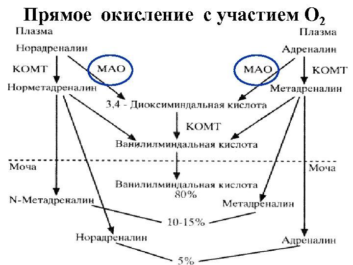 Прямое окисление с участием О 2 R-CH 2 -NH 2+ Е-ФАД + H 20