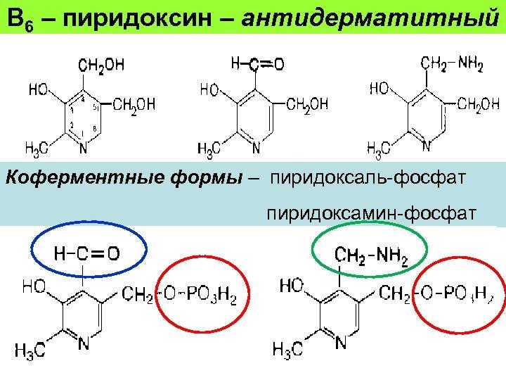 В 6 – пиридоксин – антидерматитный Коферментные формы – пиридоксаль-фосфат пиридоксамин-фосфат