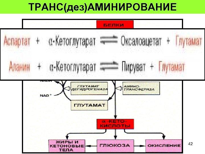 ТРАНС(дез)АМИНИРОВАНИЕ 42