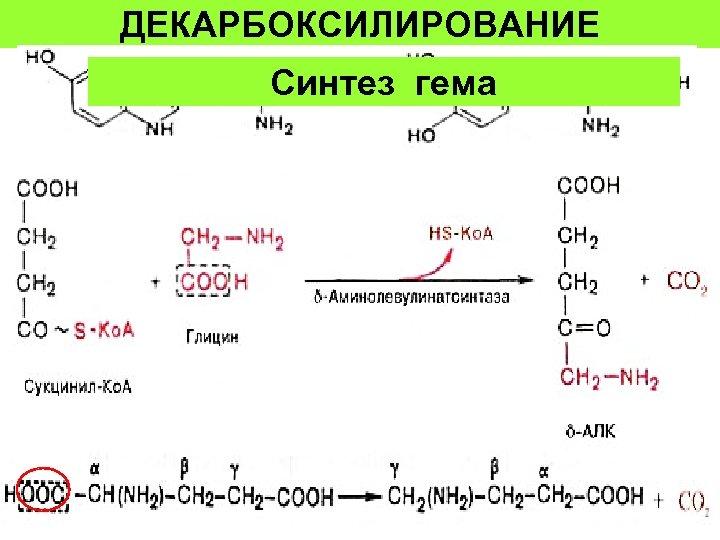 ДЕКАРБОКСИЛИРОВАНИЕ Синтез гема 44