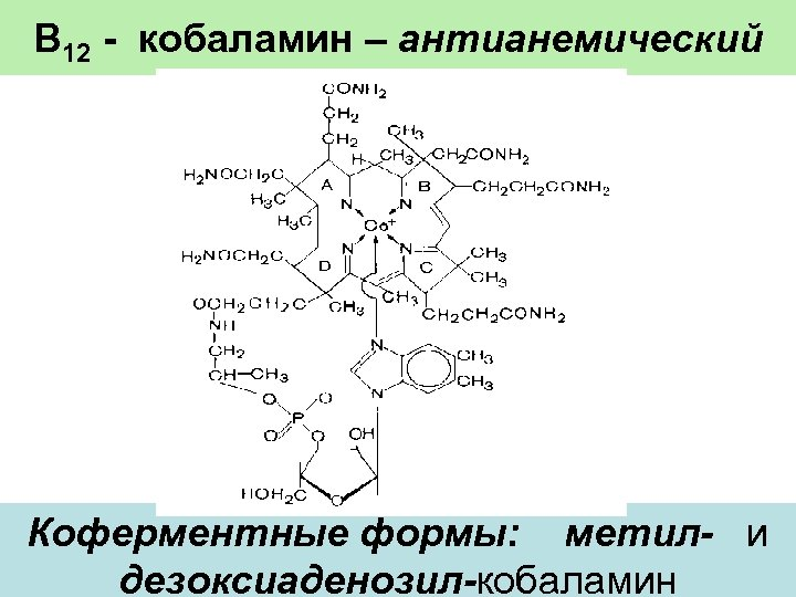 В 12 - кобаламин – антианемический Коферментные формы: метил- и дезоксиаденозил-кобаламин