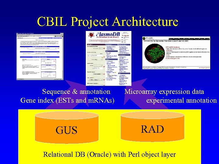CBIL Project Architecture Sequence & annotation Gene index (ESTs and m. RNAs) GUS Microarray