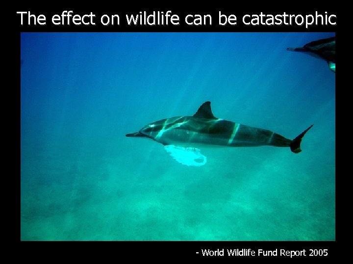 The effect on wildlife can be catastrophic - World Wildlife Fund Report 2005