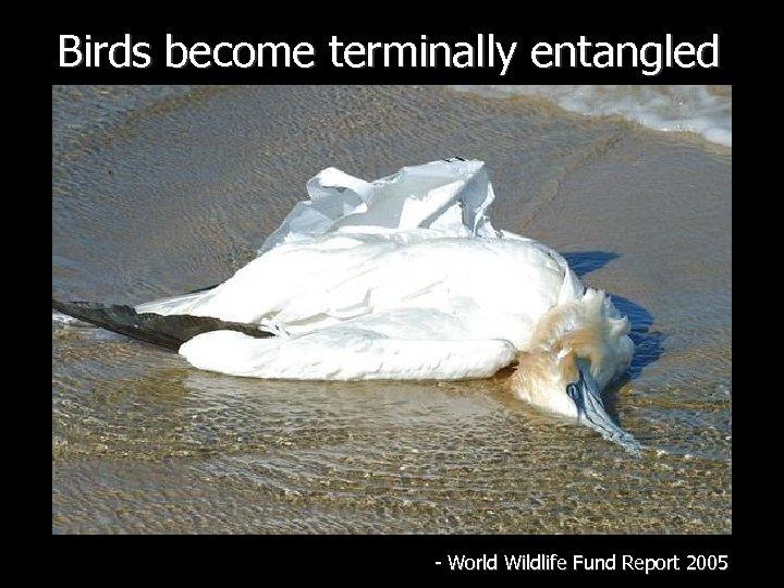 Birds become terminally entangled - World Wildlife Fund Report 2005
