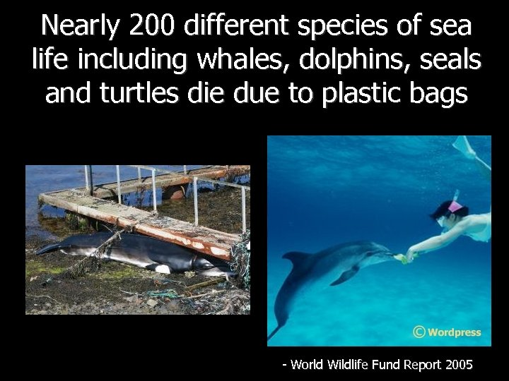 Nearly 200 different species of sea life including whales, dolphins, seals and turtles die