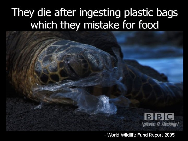They die after ingesting plastic bags which they mistake for food - World Wildlife