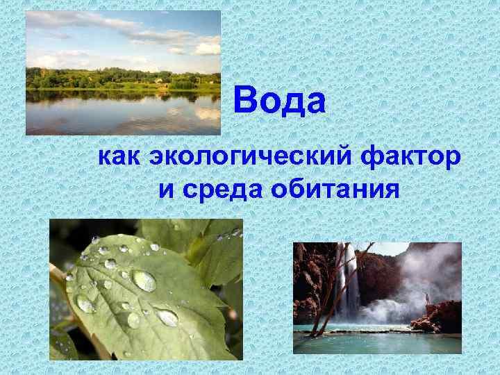 Вода как экологический фактор и среда обитания