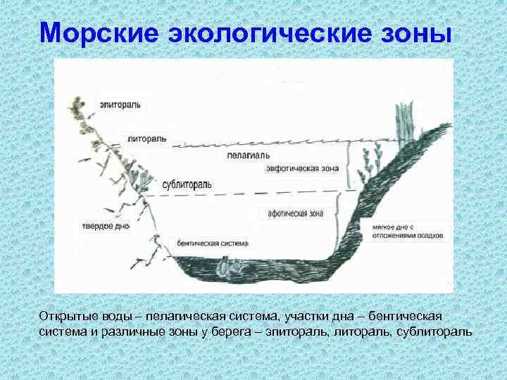 Морские экологические зоны Открытые воды – пелагическая система, участки дна – бентическая система и