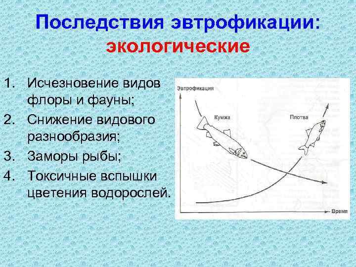 Последствия эвтрофикации: экологические 1. Исчезновение видов флоры и фауны; 2. Снижение видового разнообразия; 3.