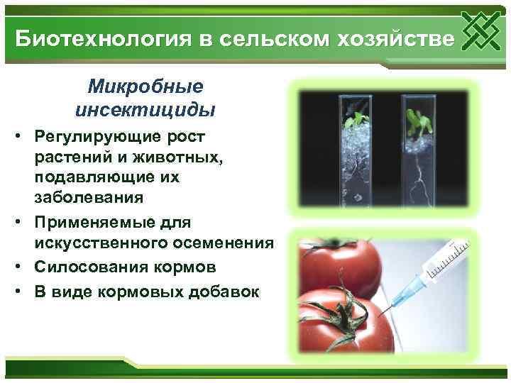 Биотехнология в сельском хозяйстве Микробные инсектициды • Регулирующие рост растений и животных, подавляющие их