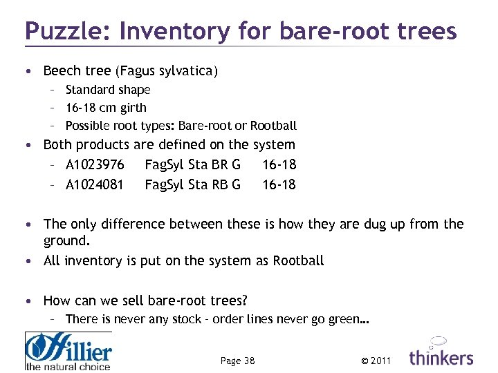 Puzzle: Inventory for bare-root trees • Beech tree (Fagus sylvatica) – Standard shape –