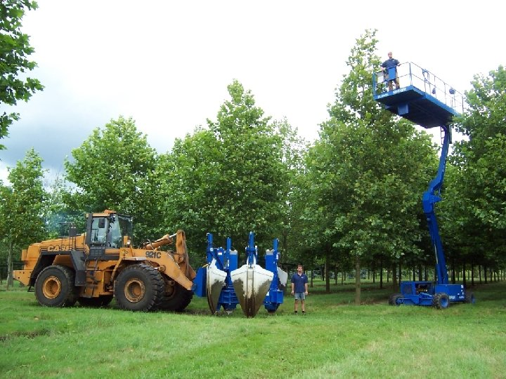 Big trees Page 5 © 2011