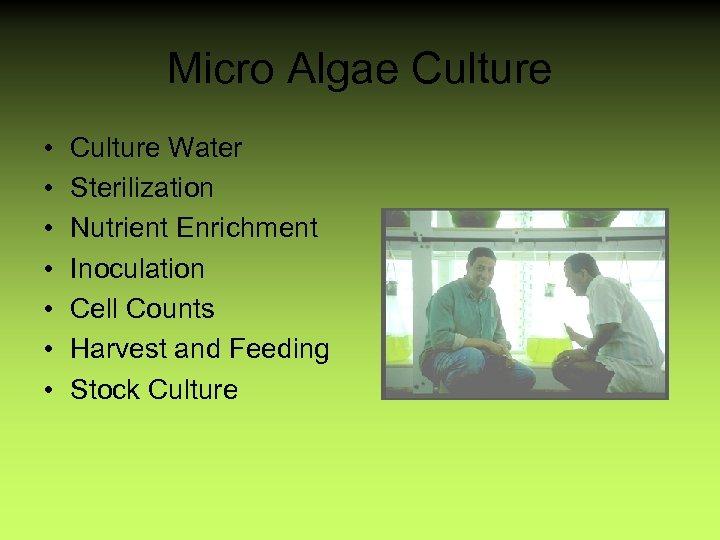 Micro Algae Culture • • Culture Water Sterilization Nutrient Enrichment Inoculation Cell Counts Harvest
