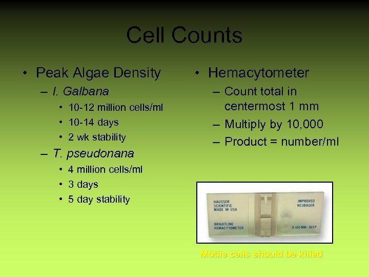 Cell Counts • Peak Algae Density – I. Galbana • 10 -12 million cells/ml