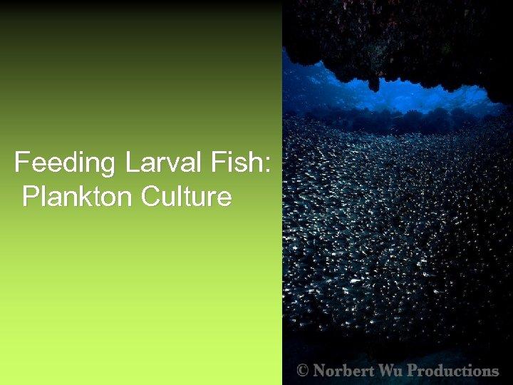 Feeding Larval Fish: Plankton Culture