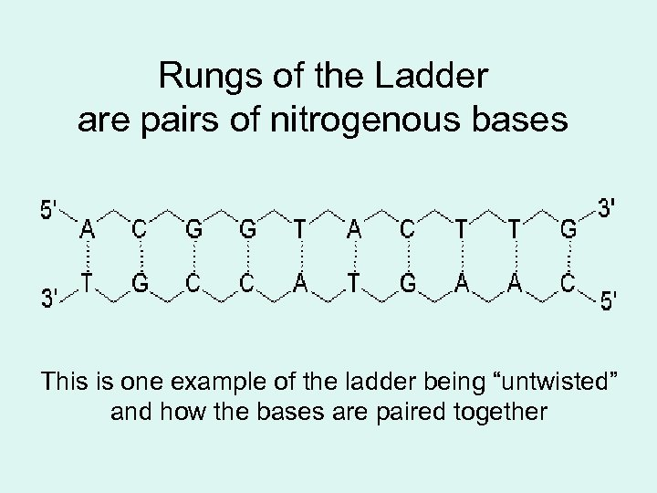 Rungs of the Ladder are pairs of nitrogenous bases This is one example of