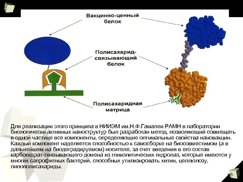 Для реализации этого принципа в НИИЭМ им. Н. Ф. Гамалеи РАМН в лаборатории биологически