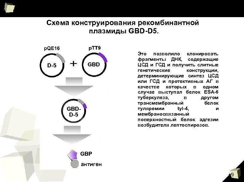 Схема конструирования рекомбинантной плазмиды GBD-D 5. GBD D-5 GBDD-5 Это позволило клонировать фрагменты ДНК,