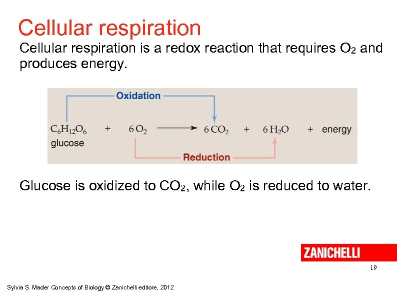 Cellular respiration is a redox reaction that requires O 2 and produces energy. Glucose