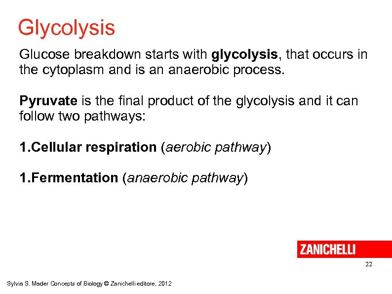 Glycolysis Glucose breakdown starts with glycolysis, that occurs in the cytoplasm and is an