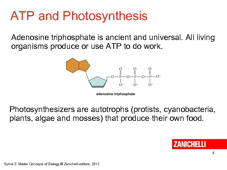 ATP and Photosynthesis Adenosine triphosphate is ancient and universal. All living organisms produce or